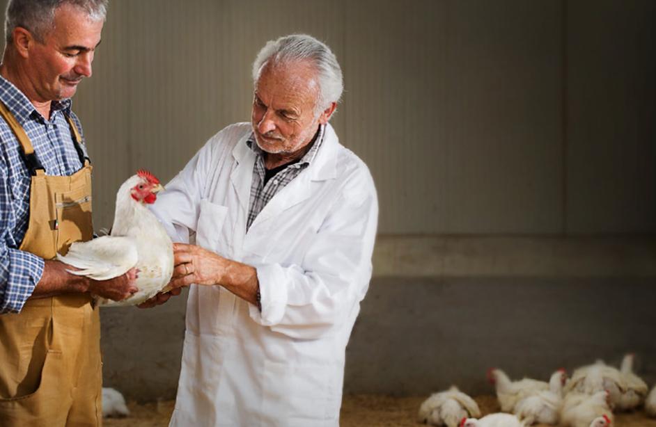 """<h3>Produzione ecosotenibile</h3><p>Il frutto di tanto lavoro, essere """"innovatori e conservatori"""", tener conto di ciò che è il benessere dell'ambiente e degli animali, si posso sintetizzare in tre punti che identificano la filosofia con cui O.R.A. opera:</p><ul><li>benessere degli animali, dato chegli animali sono allevati a terra nel totale rispetto della legge sul benessere animale</li><li>sicurezza alimentare, poiché l'alimentazione è totalmente priva di promotori di crescita e tutti i capi sono allevati in condizioni ottimali</li><li>tracciabilità del prodotto,garantita per tutti gli animali riproduttori, allevamento, macellazione e trasformazione</li></ul>"""
